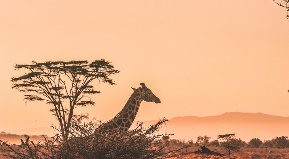 Styl safari – trend na lato 2020